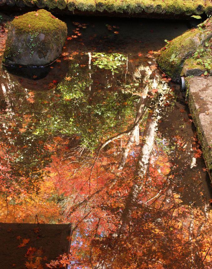 ミニ鏡池に移る水彩画のような紅葉