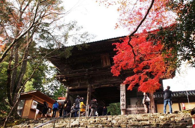 楼門と赤く色づいた枝葉が美しい