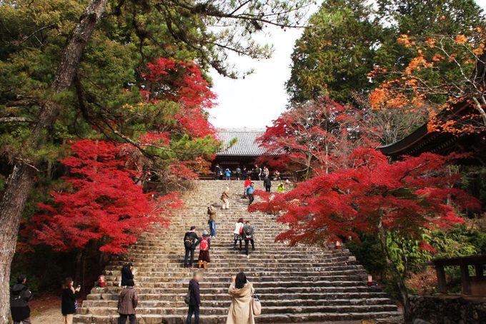 紅葉の下でお茶も堪能できる穴場スポット!京都の一足早い紅葉は「神護寺」で