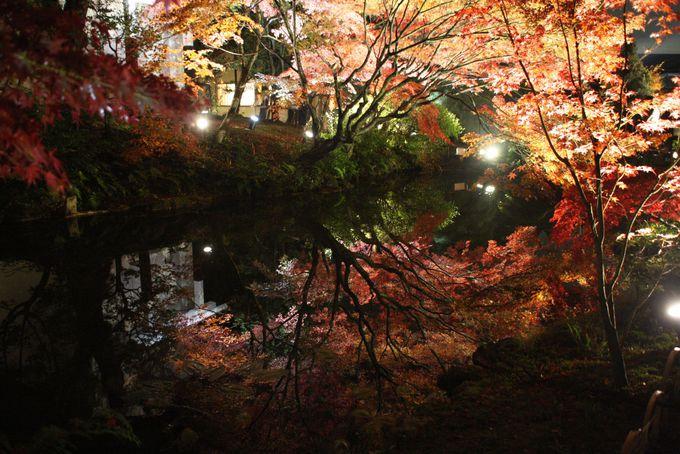 回遊式庭園の池に映りこむ紅葉が美しい