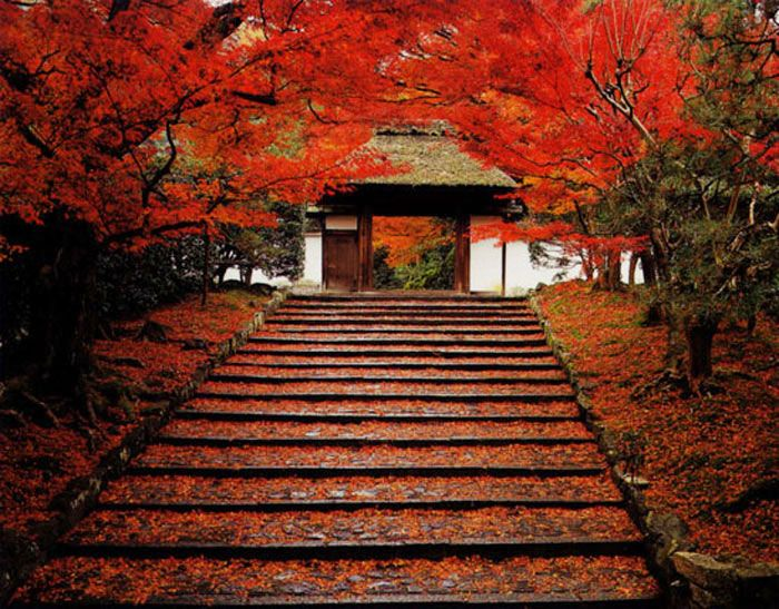 山門の石段が真っ赤に染まる散紅葉
