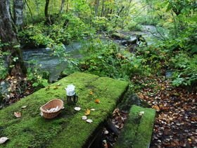 苔テーブルのモーニングカフェが異空間!奥入瀬渓流ホテル(星野リゾート)
