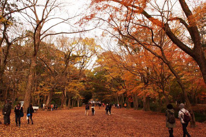 広大な面積を誇る糺の森