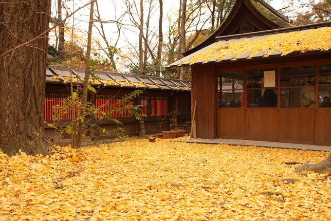 黄金色に輝く美麗の神様 河合神社