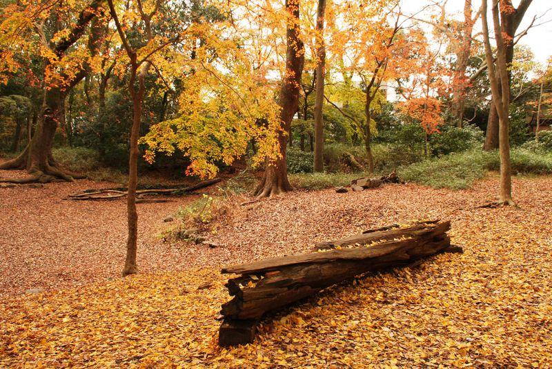 京都・下鴨神社「糺の森」の紅葉はまるでヨーロッパの公園!