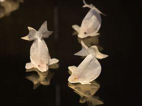 台湾の金魚はおいしくて美しい!CHARM VILLA(子村荘園)の金魚形ティーパック