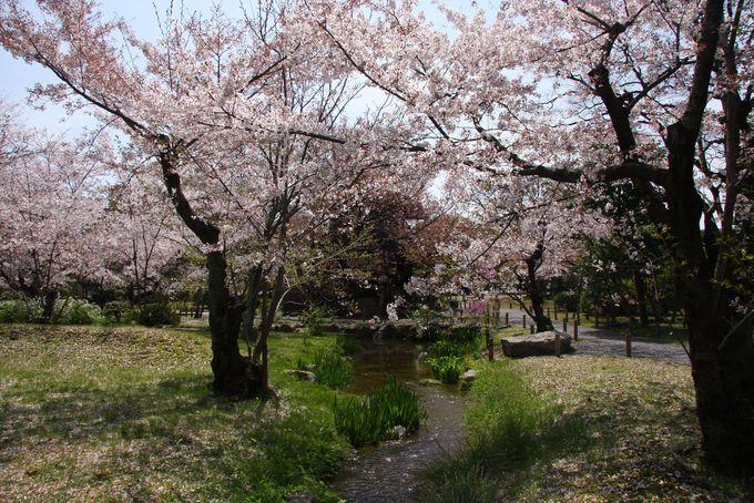 傍花閣(ぼうかかく)は名にふさわしい桜景色