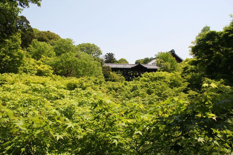 一面緑の青もみじの渓谷!京都紅葉の名所「東福寺」は人が少ない初夏もおススメ