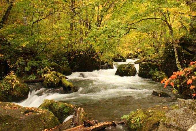 美しい奥入瀬渓流へ寄り道