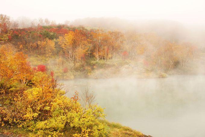 十和田湖へと続く103号線は美しい紅葉ロード