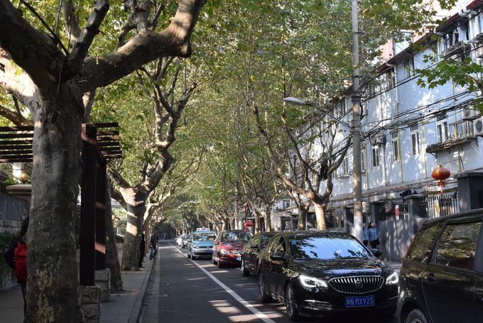 上海人にも人気のウォーキングストリート「思南路」