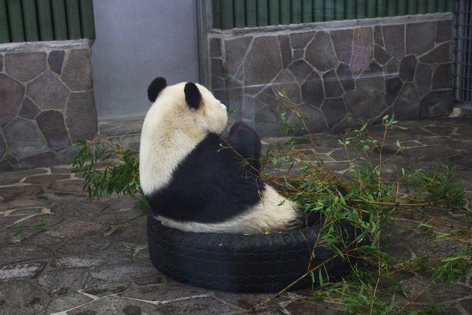 動物園の入口では桜とパンダがお出迎え