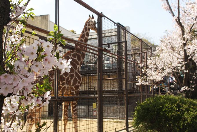 3.神戸市立王子動物園