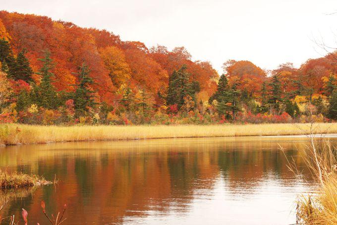 沼に映る深紅のモミジが美しい!秋田八幡平・大沼自然研究路