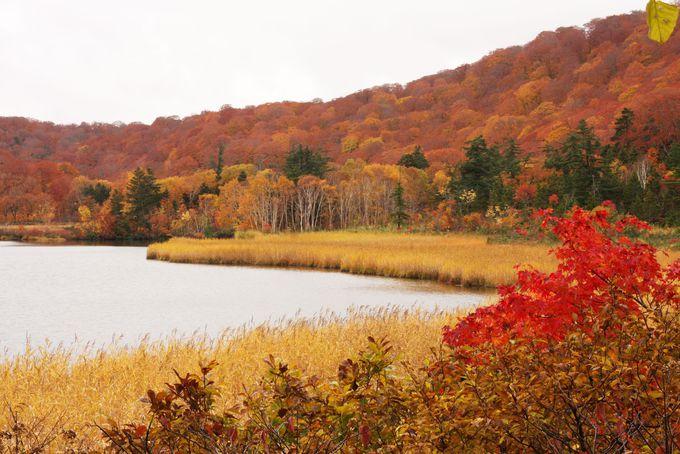 大沼に映る紅葉は溜息が出るほどの美しさ