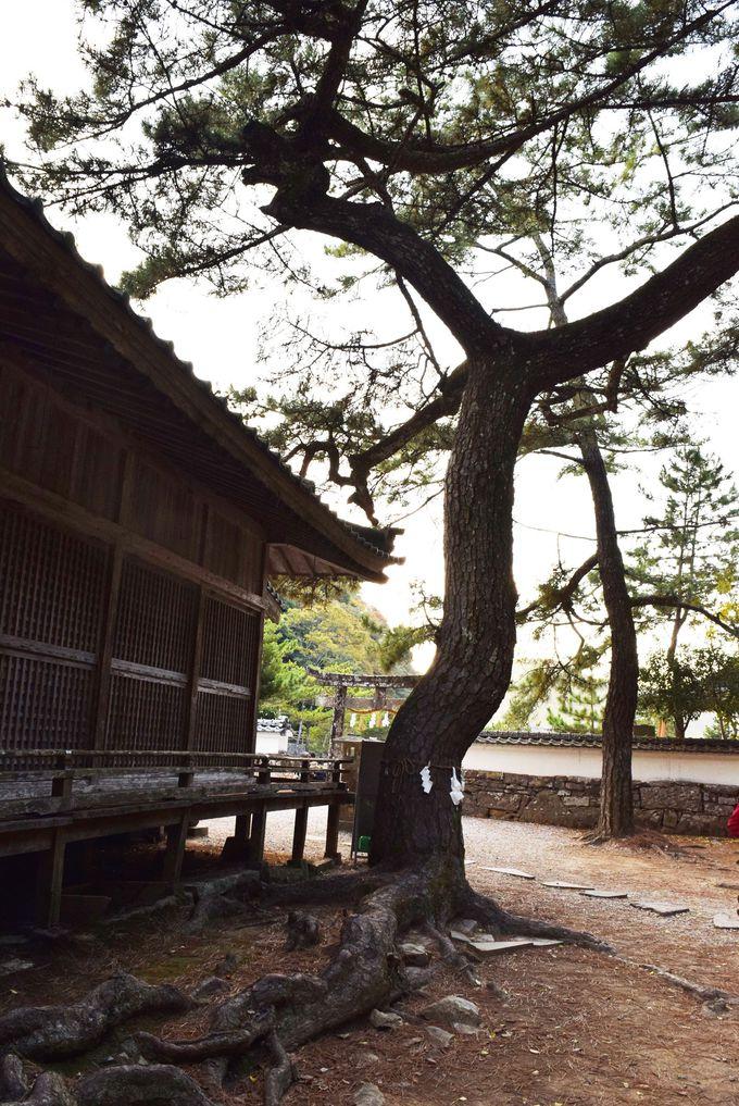 まるで龍神?!パワーを感じる荘厳な木
