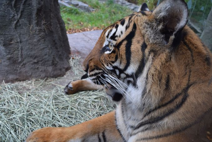 約300種1000頭もの動物がすむウッドランド・パーク