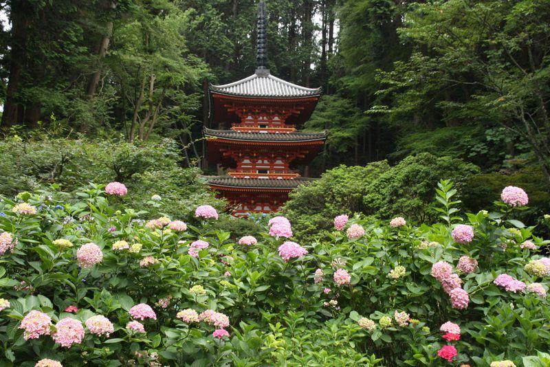 京都あじさいの穴場「岩船寺」から浄瑠璃寺を散策すれば気分上々!