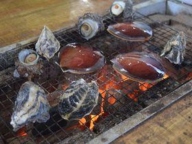 みかんと牡蠣好き必見!佐賀の道の駅「たらふく館」は冬が楽しい!