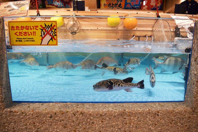 簡単に釣れる引っかけ釣り場は子どもも楽しめる