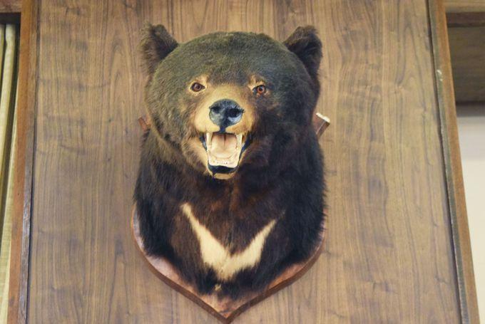 熊が傷を癒していた湯