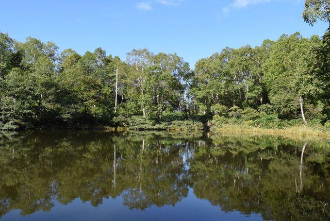 原生林をぬけると美しい散歩道へ