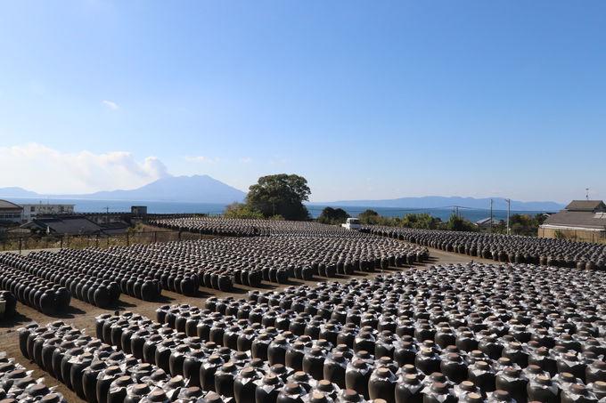壺畑と桜島の絶景スポット