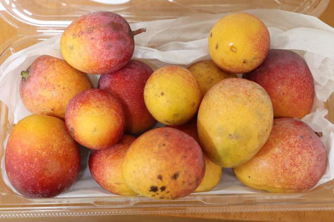 マンゴーの季節限定「マンゴー共和国」
