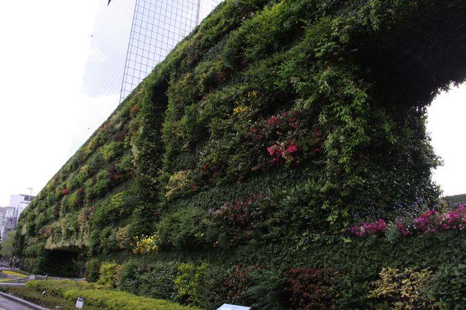 都会のオアシス!緑化壁は必見!