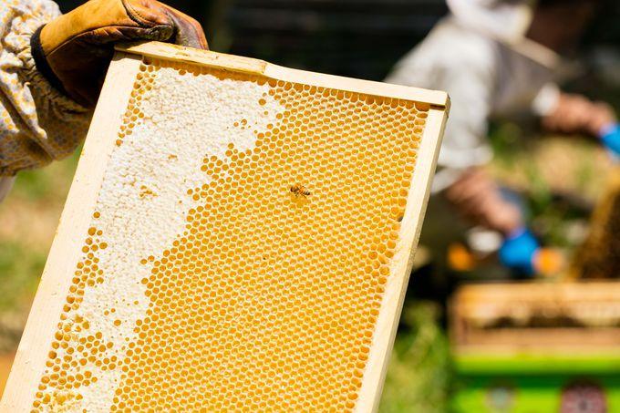 大阪のビルの屋上でハチミツ採れます