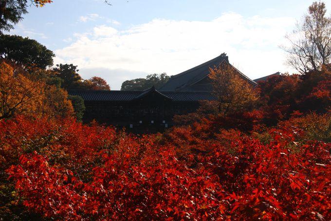一度は見たい東福寺紅葉の見頃は11月下旬