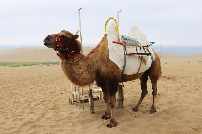 ラクダに乗ってのんびり観光