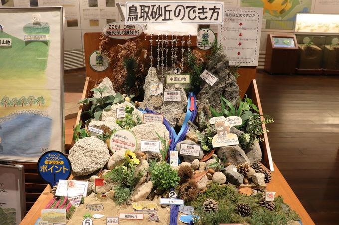 鳥取砂丘あれこれが一度にわかる「鳥取砂丘ビジターセンター」