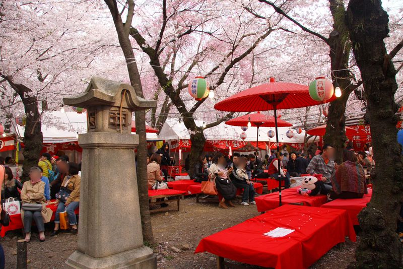 京都「平野神社」の桜鑑賞は花見茶屋で!予約方法、楽しみ方とは?