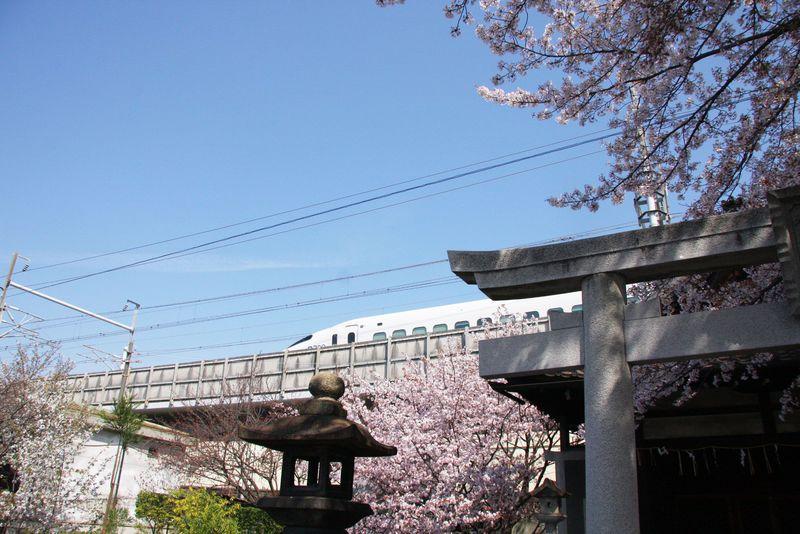 六孫王神社で京都の桜×新幹線×神社の夢の競演が見られる!