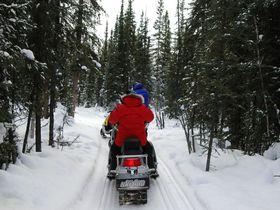 疾走!極寒のアラスカで犬ゾリとスノーモービルに乗ろう