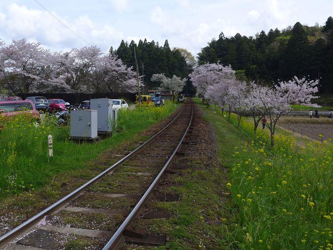 飯給駅の線路周辺もお花畑です!