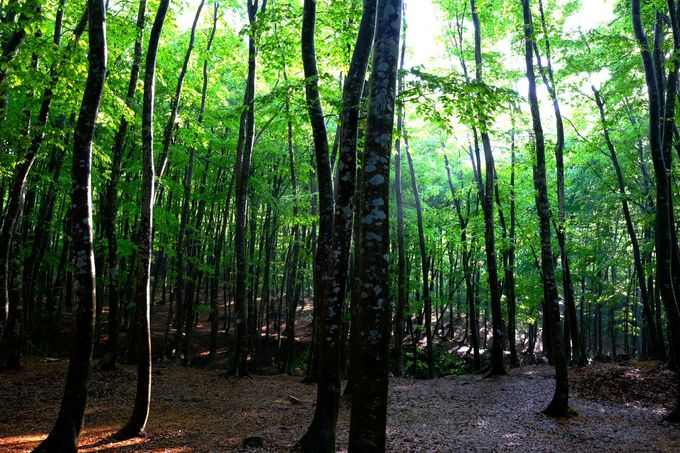 美人林に射しこむ幻想的な光