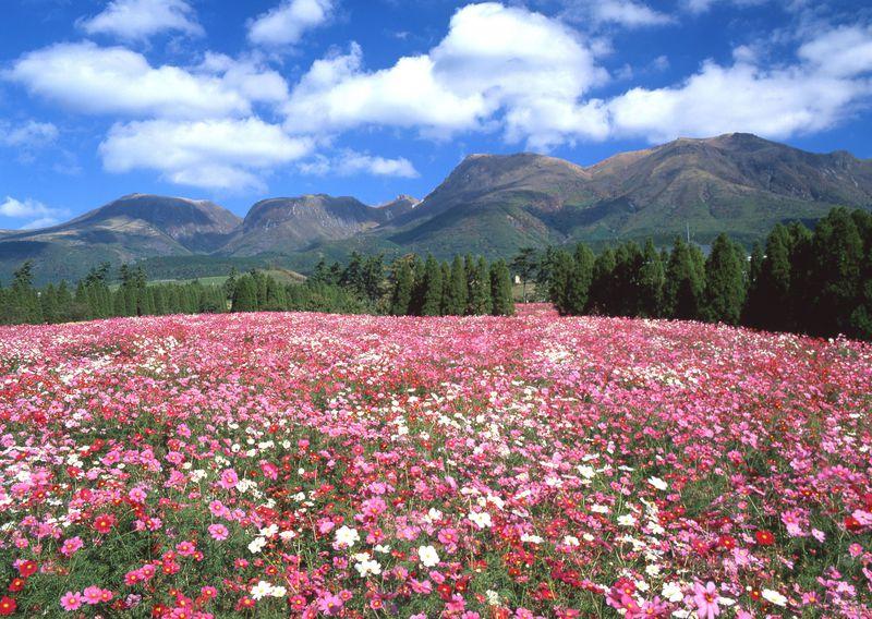 国立公園内で1泊1万円!大分「久住高原荘」は天然温泉付きの国民宿舎