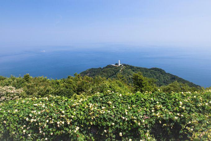 絶景!海抜200mの絶壁にたつ「鶴御埼灯台」