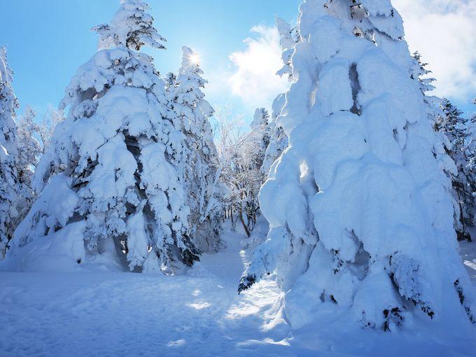 徒歩10分で根子岳山頂へ!