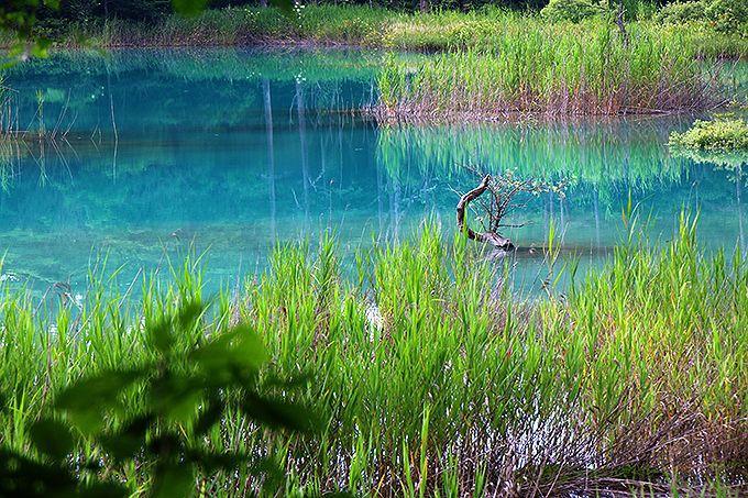 森の中に散らばる宝石のような五色沼