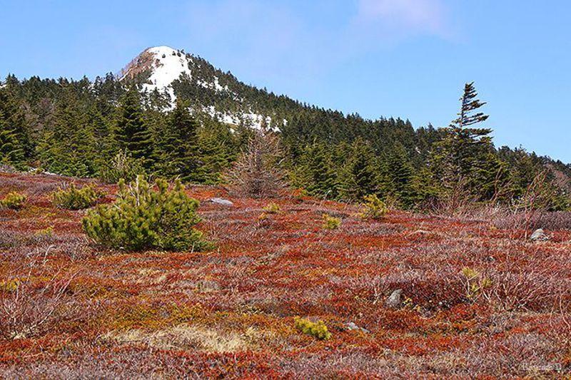 日本百名山 長野「四阿山」登頂!ハイジがいそうな広大な牧場と360度の絶景山歩き