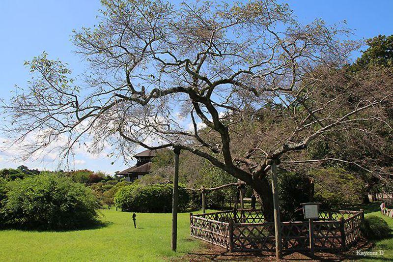 梅園だけじゃない!茨城・水戸の偕楽園とその周辺の観光スポット