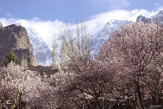 花が咲き誇るフンザの春