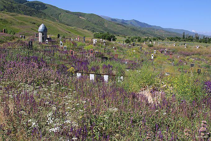 天国のような花畑に埋もれた墓地