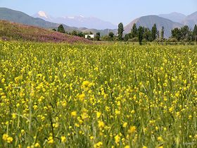 まるでおとぎの国!花が咲き乱れるキルギスのチョンケミン渓谷でフラワーハイキング