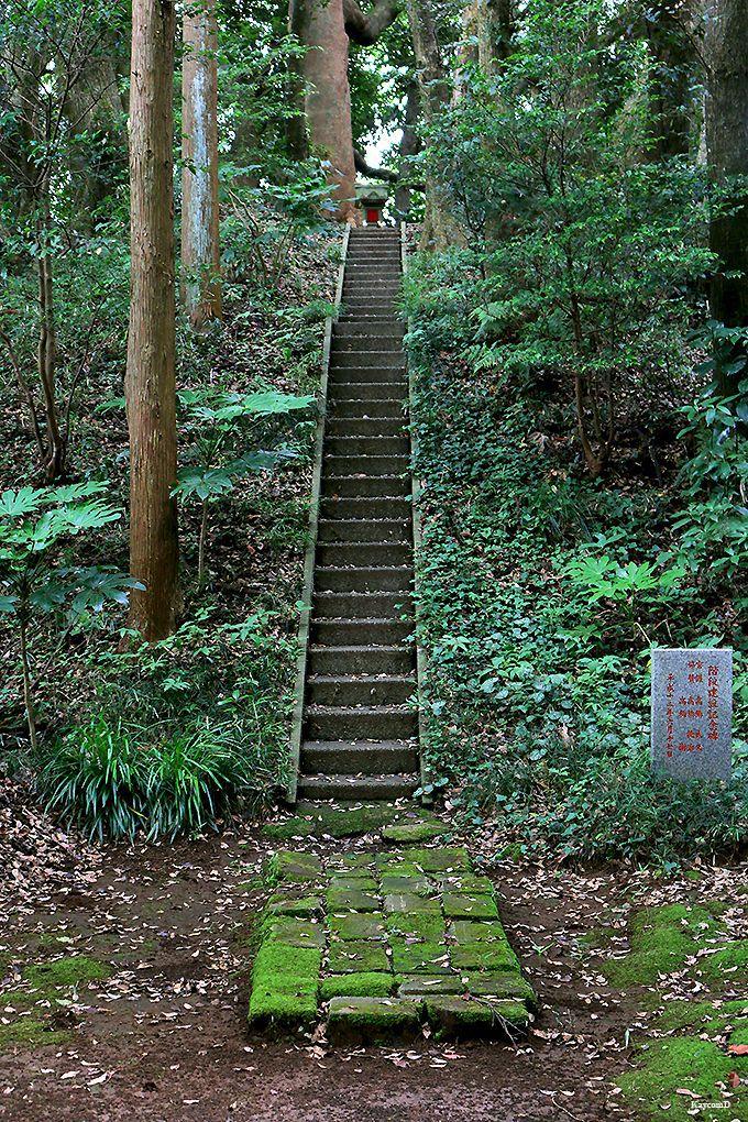 鹿島神宮〜高台〜宮中野古墳群の森
