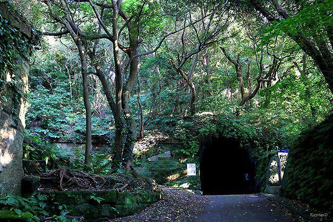 三浦半島の観音崎公園