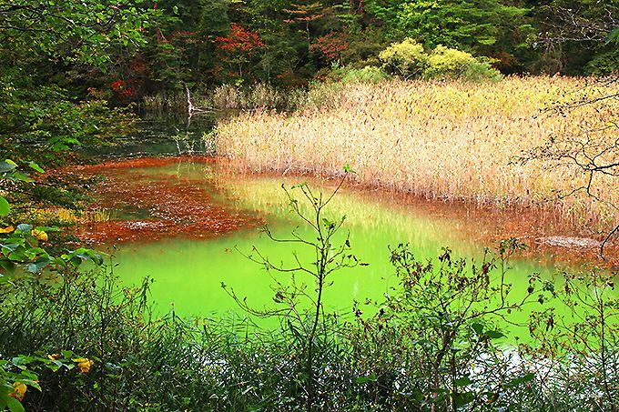 色彩が美しい「深泥(みどろ)沼」と「赤沼」